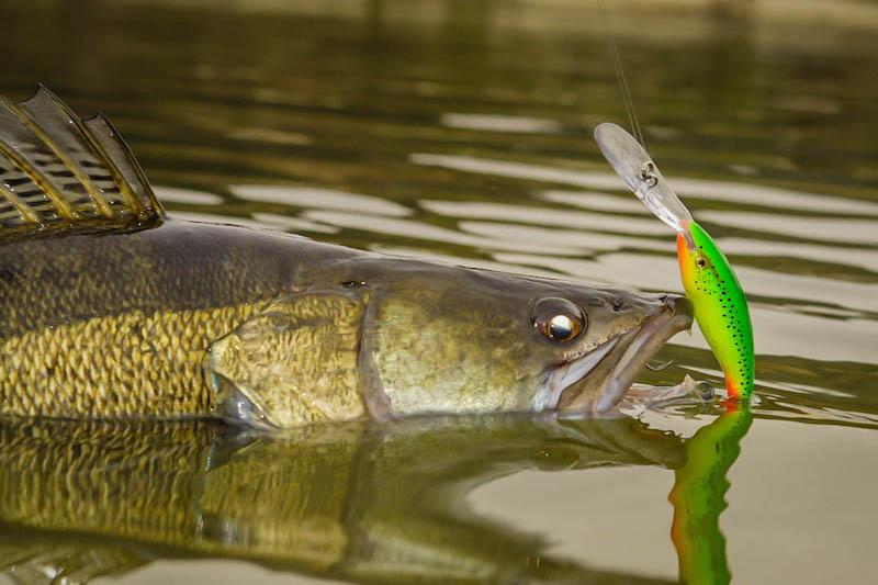 pescuit la rapitori